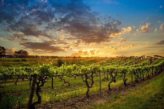 Wijnland Australië