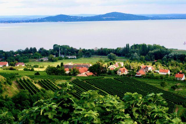 Wijnland Hongarije